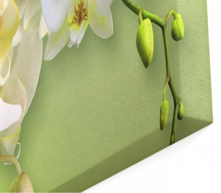 Tablou modular, Orhidee albă pe fundal verde.