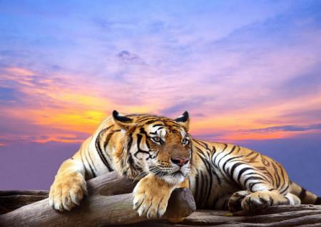 Fototapet Animale, Tigru pe fundalul unui apus de soare