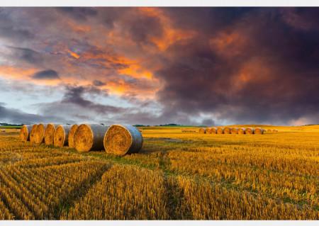 Fototapet, Apusul de soare în câmp