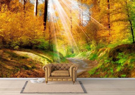 Fototapet, Razele soarelui în pădure