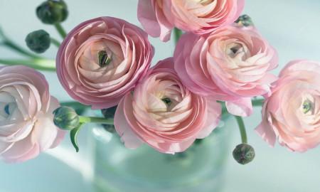 Multicanvas, Bujori roz pe fundal albastru