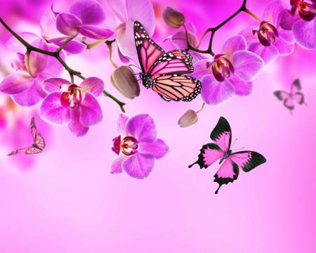 Multicanvas, Orhideea roz cu fluturi