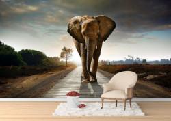 Fototapet, Elefantul pe stradă