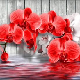 Fototapet, Orhidee roșie pe un fundal gri de lemn