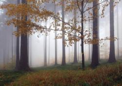Fototapet, Pădurea în ceață
