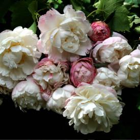 Fototapet, Un buchet de flori de primăvară