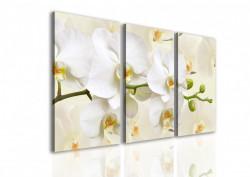 Multicanvas, Orchideea alb pe un fundal bej.