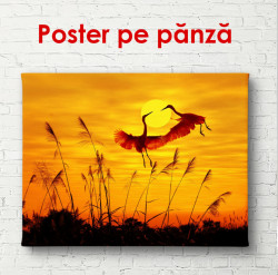 Poster, Berzele la apus de soare