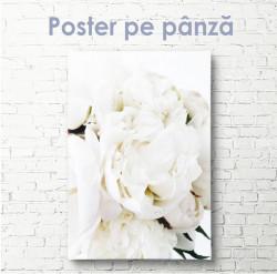 Poster, Bujorul alb