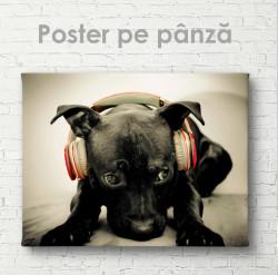 Poster, Câine în căști roz