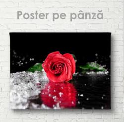 Poster, Trandafir roșu aprins