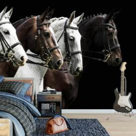 Fototapet, Cai albi și negri