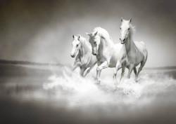 Fototapet, Cai în galop alb-negru