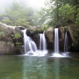Fototapet, Frumoasa cascadă în pădurea verde