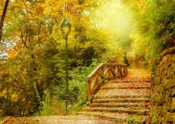 Fototapet Natura, Peisaje, Pădurea verde