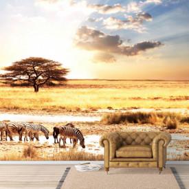 Fototapet, O plimbare în deșert