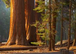 Fototapet, Pădurea minunilor
