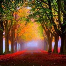 Fototapet, Paznicii pădurii