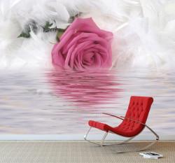 Fototapet, Trandafirul tandru