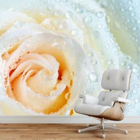 Fototapet, Un trandafir galben și roua de dimineață