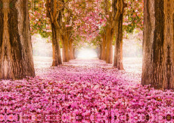 Fototapete Alee cu flori roz