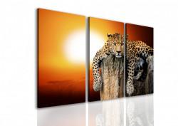 Multicanvas, Leopardul la apusul soarelui