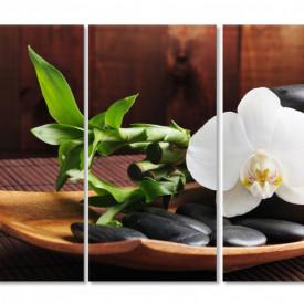 Multicanvas, Orhideea pe o farfurie.