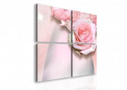 Multicanvas, Trandafirul fin roz.