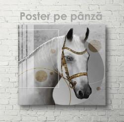 Poster, Cal alb