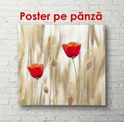 Poster, Câmpul de maci la apus