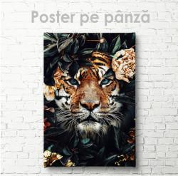 Poster, Privire prădătoare