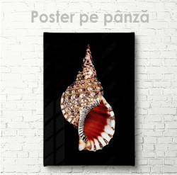 Poster, Scoică