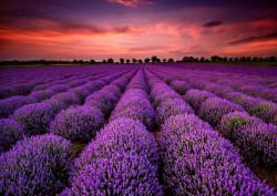 Fototapet, Apusul violet