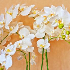 Fototapet, Orhidee albe pe un fundal bej