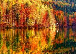 Fototapet, Pădure toamna