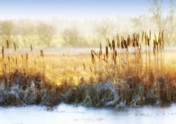 Fototapete Natura toamna