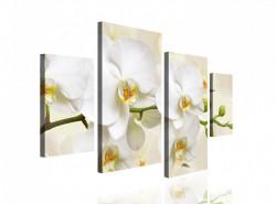 Multicanvas, Orhideea albă pe un fundal bej.