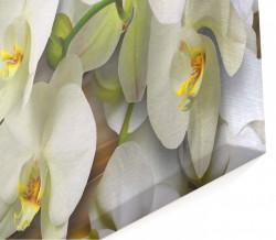 Multicanvas, Orhideea albă pe un fundal maro.