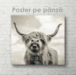 Poster, Bivol