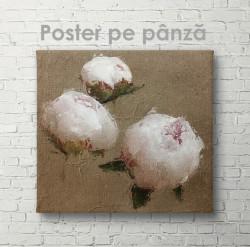 Poster, Bujori de culoare nude 1