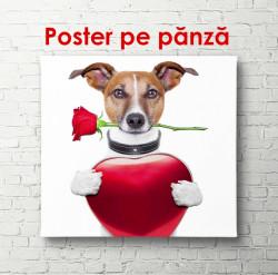 Poster, Câine cu trandafir și inimioară