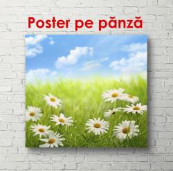 Poster, Câmp de flori de romanițe