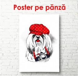 Poster, Cățeluș alb cu o șapcă roșie