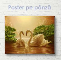 Poster, Două lebede frumoase