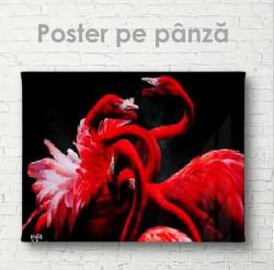 Poster, Flamingo roșii