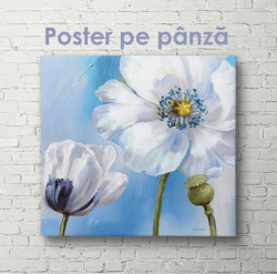 Poster, Floare albă de mac