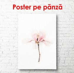 Poster, Floarea roz