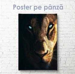 Poster, Leoaică cu ochi albaștri