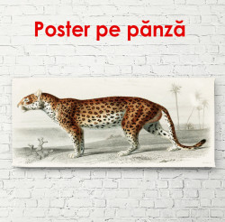 Poster, Leopard frumos