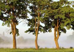 Fototapet, Înțelepții pădurii